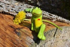 rana-feliz